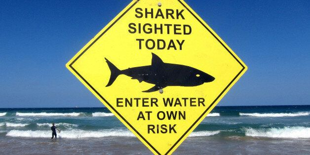 A surfer carries his board into the water next to a sign declaring a shark sighting on Sydney's Manly...