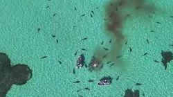 Drone κατέγραψε 70 καρχαρίες να κατασπαράζουν φάλαινα στην
