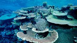 Ο πολύχρωμος Μεγάλος Κοραλλιογενής Ύφαλος της Αυστραλίας χάνει κυριολεκτικά το χρώμα