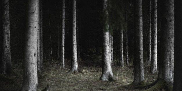Sweden, Stockholm, forest at