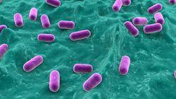 Έρευνα: Μέχρι και ένα τρισεκατομμύριο τα είδη ζωντανών οργανισμών που ζουν στη
