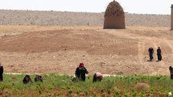 Μεγάλο πλήγμα στη γεωργική παραγωγή στη Συρία. Αυξάνεται το πρόβλημα της