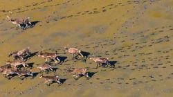 Χαθείτε μέσα σε αυτές τις πολύχρωμες φωτογραφίες από αποδημίες άγριων