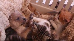 Γάτα φροντίζει κουτάβι που έμεινε ορφανό και το διαδίκτυο κλαίει από