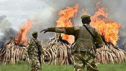 Φωτιά σε 100 τόνους ελεφαντόδοτου σε μια συμβολική τελετή για την προστασία των ελεφάντων στο