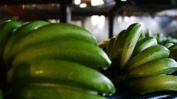 Φόβοι ότι έρχεται το τέλος της μπανάνας: Συναγερμός στη Λατινική Αμερική λόγω