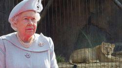 Είστε καλός με τα social media; Η Βασίλισσα Ελισάβετ χρειάζεται τη βοήθειά