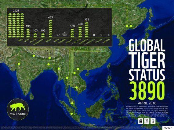 Αύξηση του πληθυσμού των άγριων τίγρεων για πρώτη φορά μέσα σε έναν