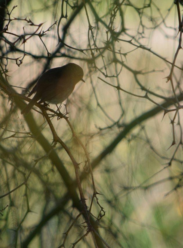 Εθνικός Δρυμός Πάρνηθας: Τρωκτικά, νυχτερίδες και κόκκινα