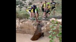 Unos ciclistas rescatan a un ciervo de morir ahogado en Huéscar