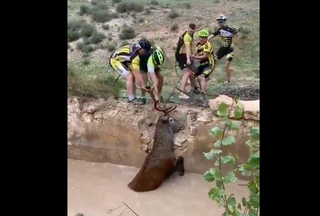 Un grupo de ciclistas salva la vida de un ciervo en
