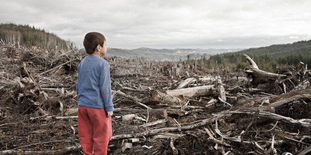 Young boy looking out at cleared landscape of fallen