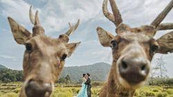 17 Photobombs γάμου που θα σας κάνουν να ξεκαρδιστείτε στα