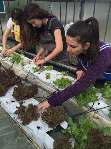 Μαθητές απο τη Θεσσαλονίκη καλλιεργούν τα πιο υγιεινά μαρούλια σε διάλυμα