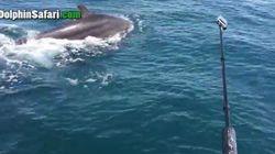 Απίστευτο βίντεο: Η στιγμή που μία φάλαινα γεννά δίπλα ακριβώς από μία βάρκα με