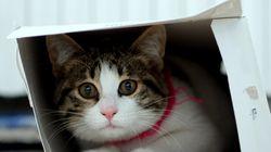 «Εφτάψυχη» γάτα στη Βρετανία επέζησε κλεισμένη σε ταχυδρομικό πακέτο επί οκτώ