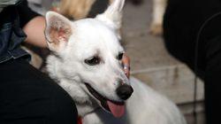 Οργή και θυμηδία: Άγνωστοι θανάτωσαν αδέσποτα σκυλιά στο κέντρο της