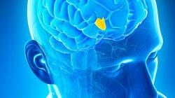 Η επιστήμη ανακάλυψε τη «ρίζα του κακού». Βρίσκεται στον εγκέφαλό μας και ευθύνεται για την επιθετική