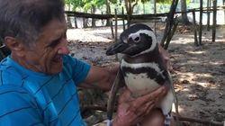 Ο συναισθηματικός πιγκουίνος που ταξιδεύει κάθε χρόνο 8.000 χιλιόμετρα για να δει τον άνδρα που τον