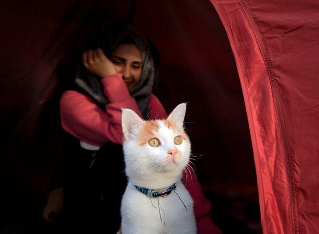 Είναι ο Ταμπούς, ο χαριτωμένος γάτος - πρόσφυγας που ήρθε από τη