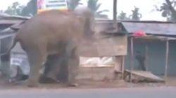 Ελέφαντας σε κατάσταση αμόκ ισοπεδώνει