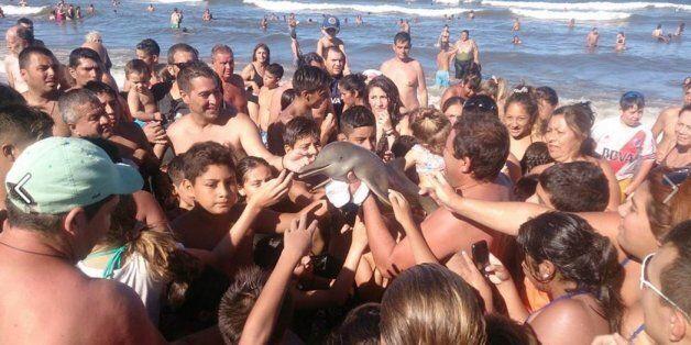 Ήθελαν να βγάλουν selfies με ένα μικρό δελφίνι και τελικά το