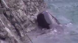 Σοκαριστικό βίντεο: Πλούσιοι ψαράδες στην Ιαπωνία οδηγούν στην σφαγή απελπισμένη