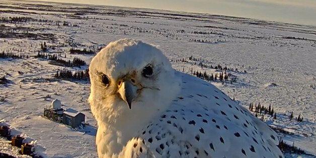 Μια webcam καταγράφει έναν πανέμορφο