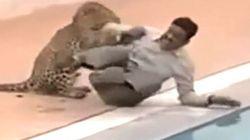 Λεοπάρδαλη μπήκε σε σχολείο στην Ινδία και τραυμάτισε