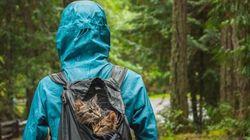 Τα γατάκια που σώθηκαν από το δρόμο και πήγαν για περιπέτειες στα βουνά και άλλα υπέροχα viral της