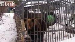 Μεθυσμένος πήγε να χαϊδέψει την αρκούδα και του έφαγε το
