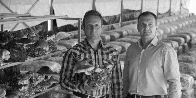 Δίρφυς: Η ελληνική εταιρεία που παράγει και εξάγει μανιτάρια είναι η απόδειξη ότι η Ελλάδα μπορεί να