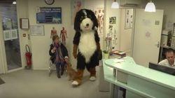 Ο Rémi Gaillard μέσα σε μία κτηνιατρική κλινική οραματίζεται έναν κόσμο όπου ζώα και άνθρωποι αλλάζουν