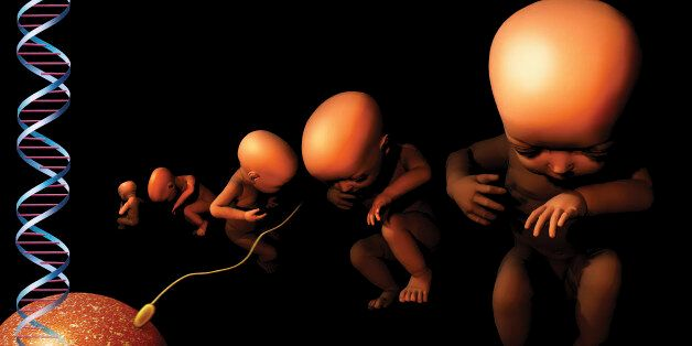 Embryos in a row, with DNA strand and egg fertilised by
