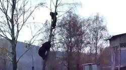 Mια τεράστια αρκούδα κυνηγάει έναν άνδρα και εκείνος σκαρφαλώνει σε ένα