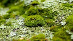 Φύκη: Ο παράγοντας έκπληξη που θα σώσει την