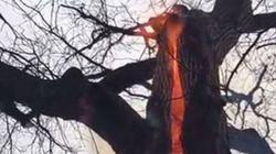 Το δέντρο του διαβόλου: Γιατί καίγεται μόνο το εσωτερικό