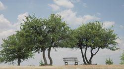 Η προστασία του περιβάλλοντος στην Ελλάδα κατά τη διάρκεια της