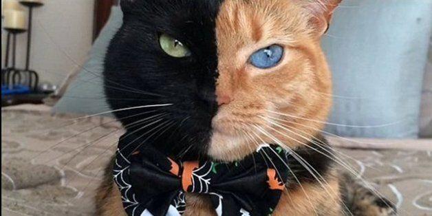 Μισή τίγρης, μισή πάνθηρας. Είναι η Αφροδίτη μαύρη και πορτοκαλί γάτα που έχει τρελάνει το
