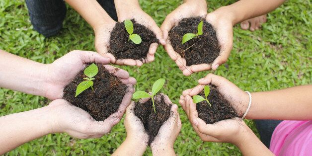 Hands holding sapling in soil surface with green grass
