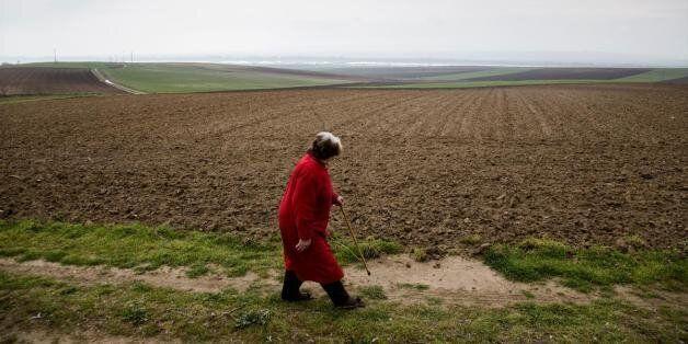 Αποστόλου: 1,3 δισ. ευρώ για την ύπαιθρο τον Δεκέμβριο - «Οι αγρότες δεν θα πληρώσουν φόρο όσο πλήρωσαν...