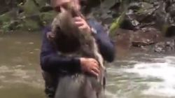 Αγκαλιάζει, φιλά και παίζει «ξύλο» με μια αρκούδα μέσα σε ένα