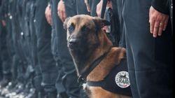 #jesuisunchien: Το Twitter τιμά τον αστυνομικό σκύλο που σκοτώθηκε στις επιχειρήσεις στο