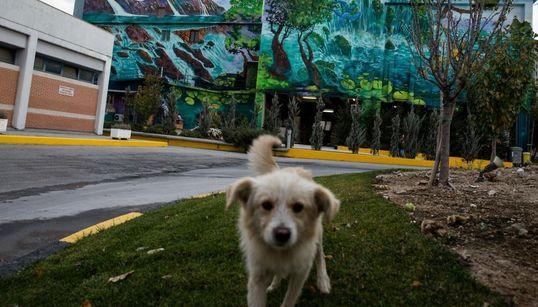 Πολύχρωμα γκραφίτι στους τείχους του εργοστασίου της τσιμεντοβιομηχανίας ΤΙΤΑΝ στην