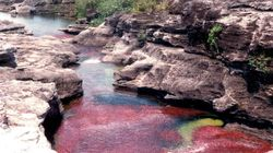 Cano Cristales: Το μοναδικό ποτάμι των πέντε