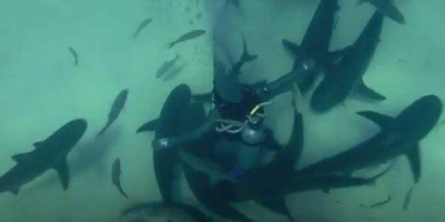 Χορεύει με τους επικίνδυνους καρχαρίες στο βυθό της θάλασσας. Η «πρέσβειρα των