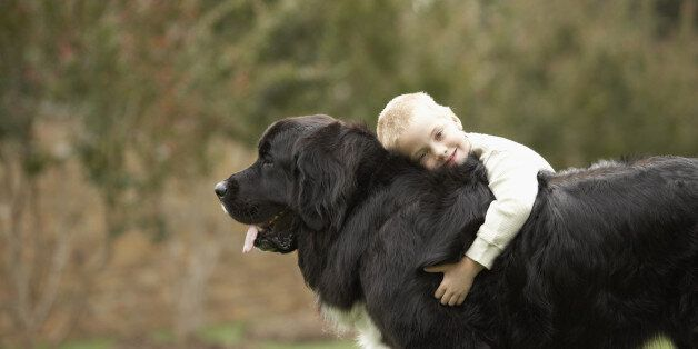 Boy (6-7) hugging black Newfoundland