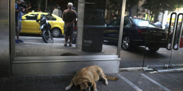 ATHENS, GREECE - JULY 06: A dog sleeps outside the Greek Finance Minstry in the wake of Yanis Varoufakis...