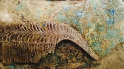 Τα ευρήματα από τον ασύλητο 3.500 χρόνια τάφο στην