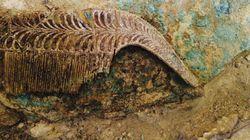 Ασύλητος τάφος αρχαίου πολεμιστή βρέθηκε στην Πύλο, με ευρήματα ανεκτίμητης